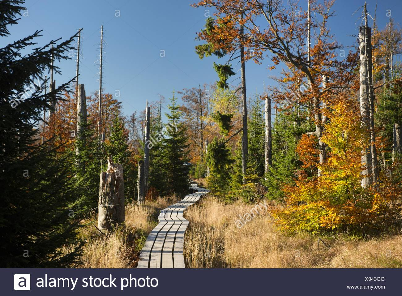 37765225a2a path through autumnal forest with wind throw of trees after stormy weather