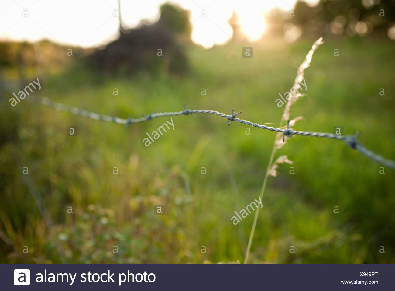 Barbed wire fence in field Stock Photo