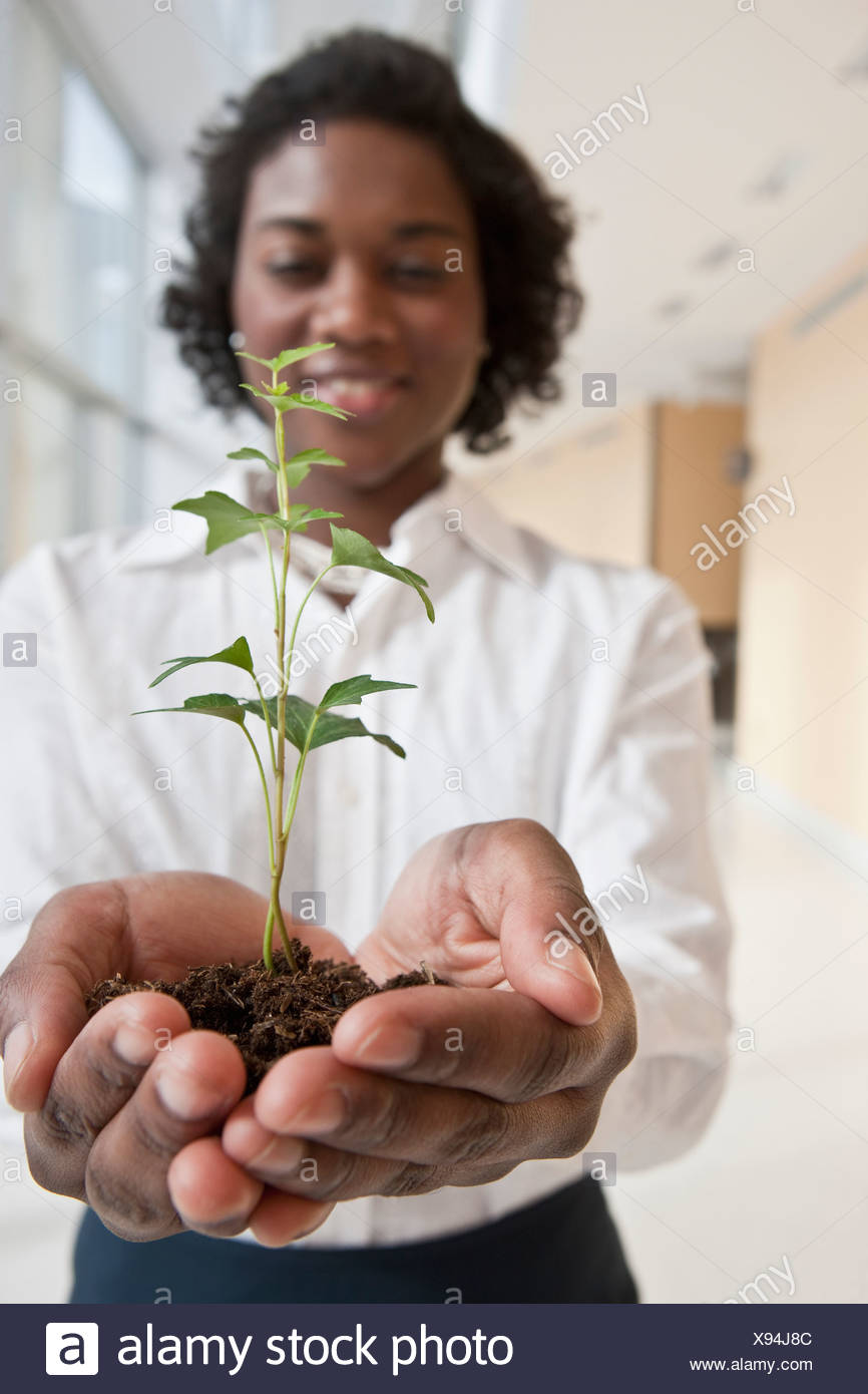 Jamaican businesswoman holding a plant - Stock Image