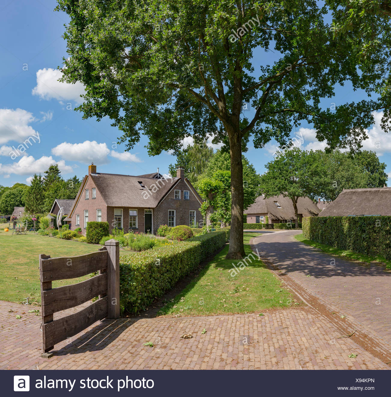 Norg,Drenthe,Farmhouses with a thatched roof - Stock Image
