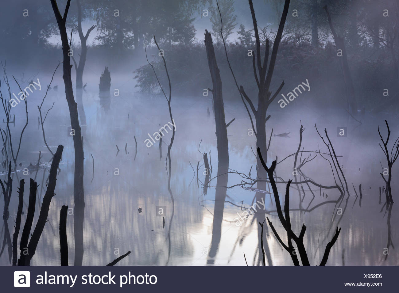 Oberriet, pit, Loo, Switzerland, Europe, canton St. Gallen, Rhine Valley, former, clay pit, dead wood, dead trees, reflection, m - Stock Image