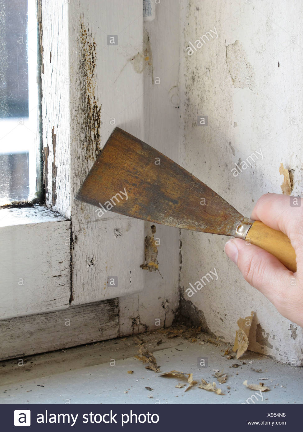 Mould on a window being removed with a spatula - Stock Image