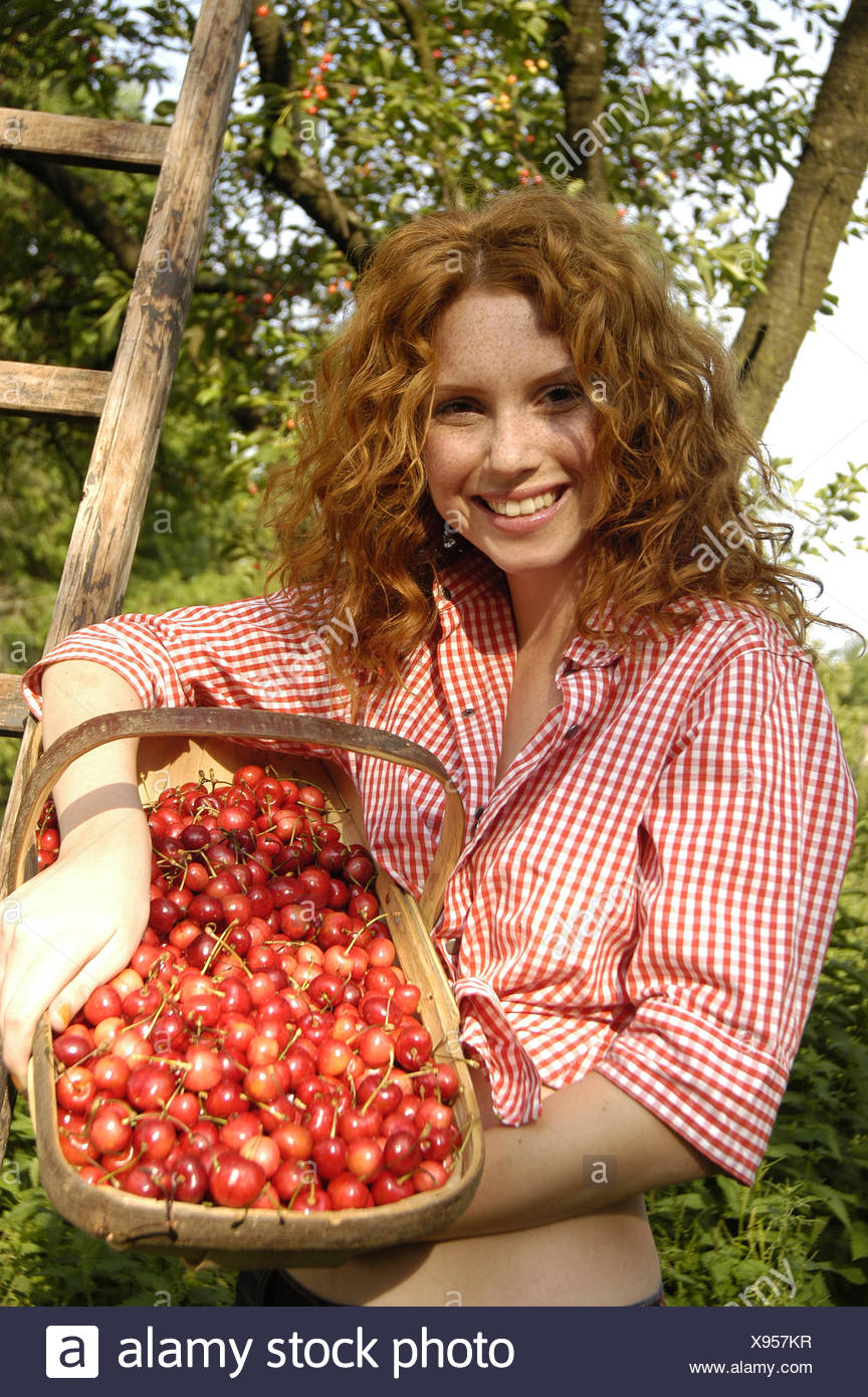 Garden, woman, young, smile, show basket, cherries, half portrait, redheads, red-haired, locks, happily, smile, harvest natural, naturalness, joy, fun, yield, rurally, land lives, orchard, summer, tree, cherry tree, cherry harvest, fruit basket, fruit bas - Stock Image