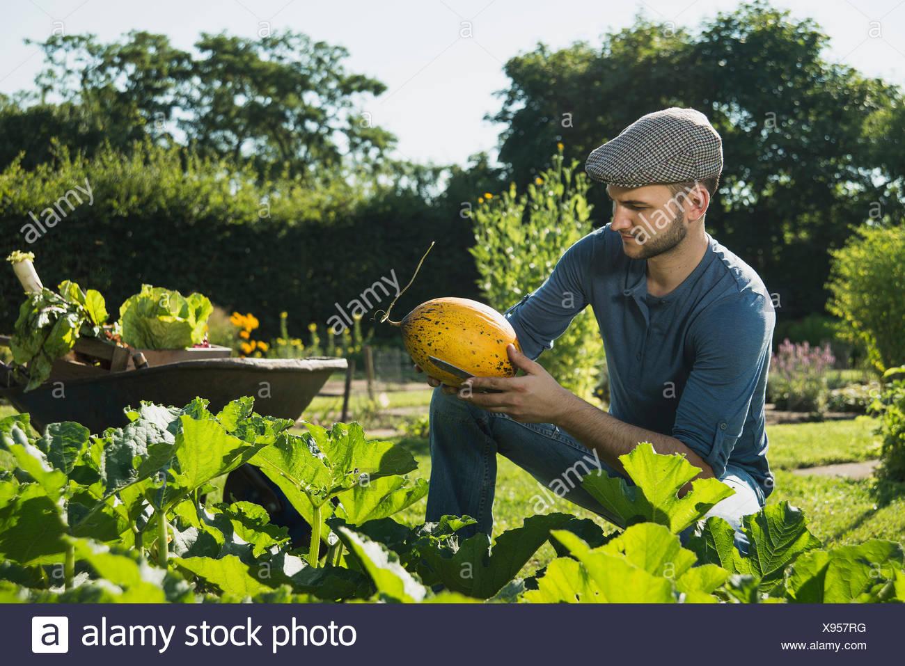 Gardener checking vegetable Stock Photo