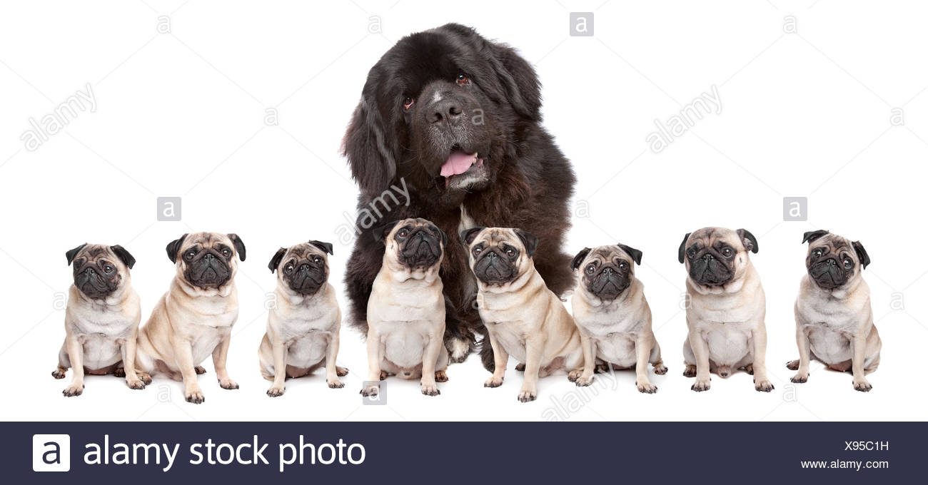 Big Dog Small Dog - Stock Image