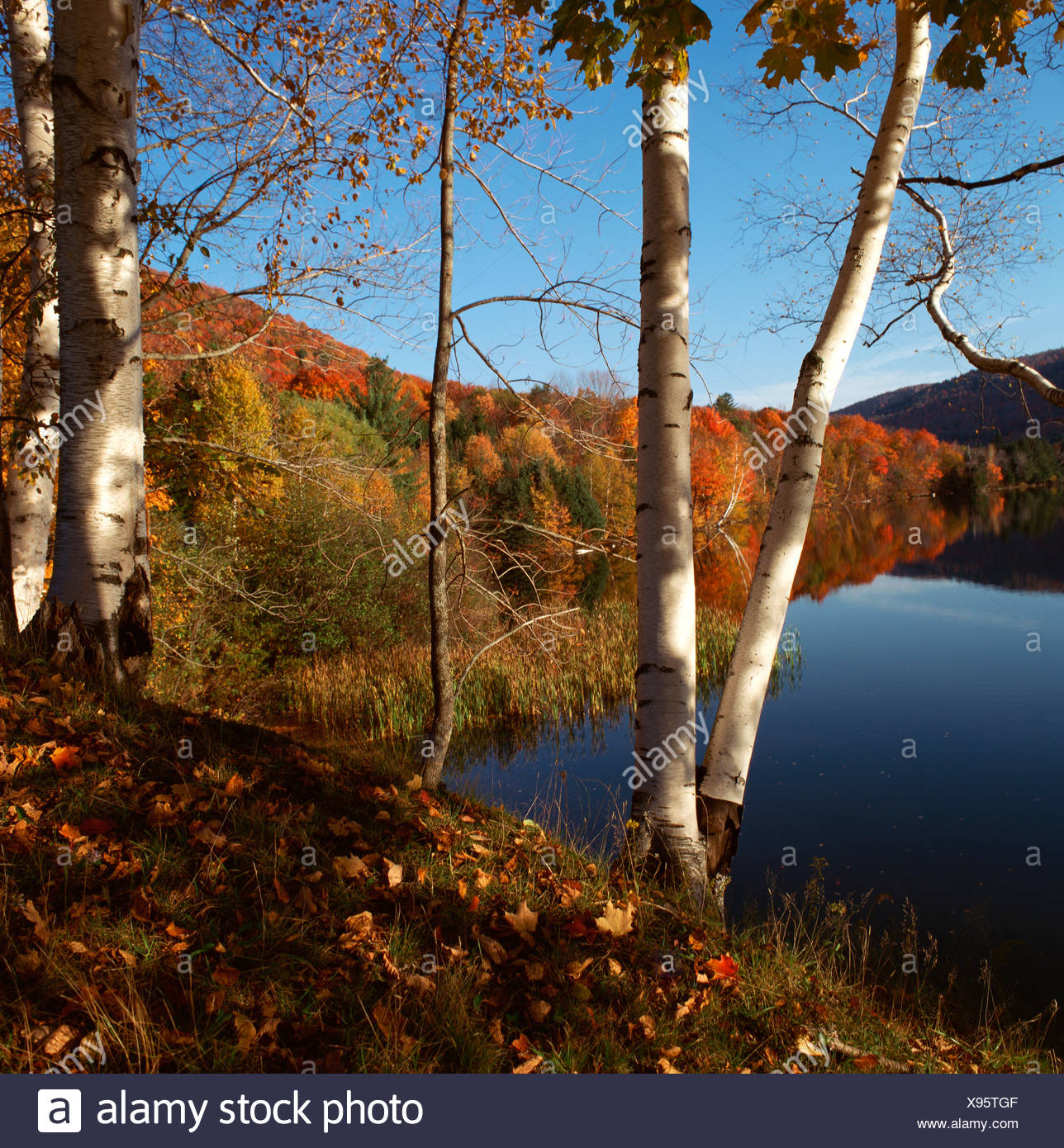 Autumnal coloured leaves at a lake, Indian summer, New England, USA Stock Photo