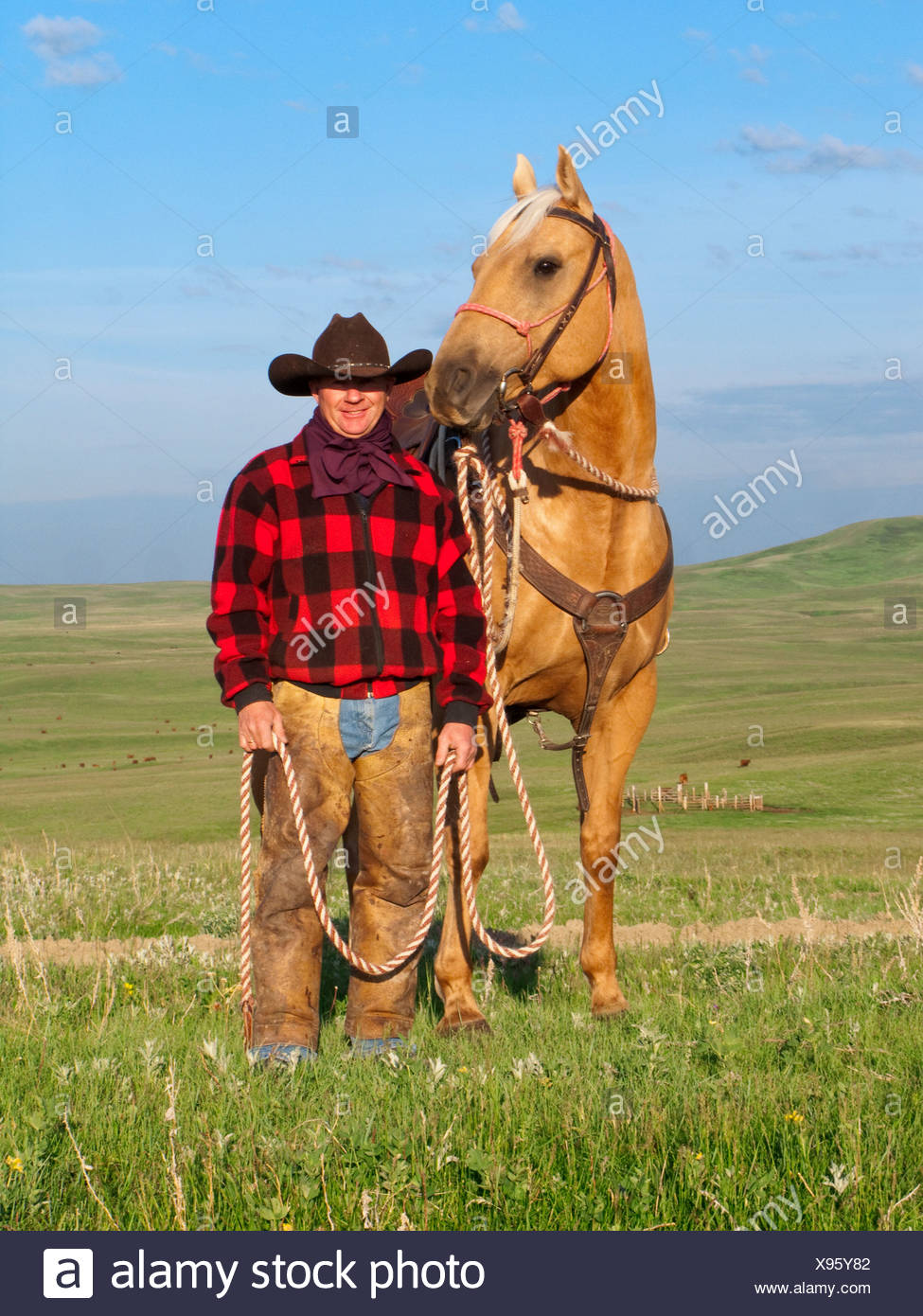 Livestock - A cowboy poses with his horse on a green prairie / Alberta, Canada. - Stock Image
