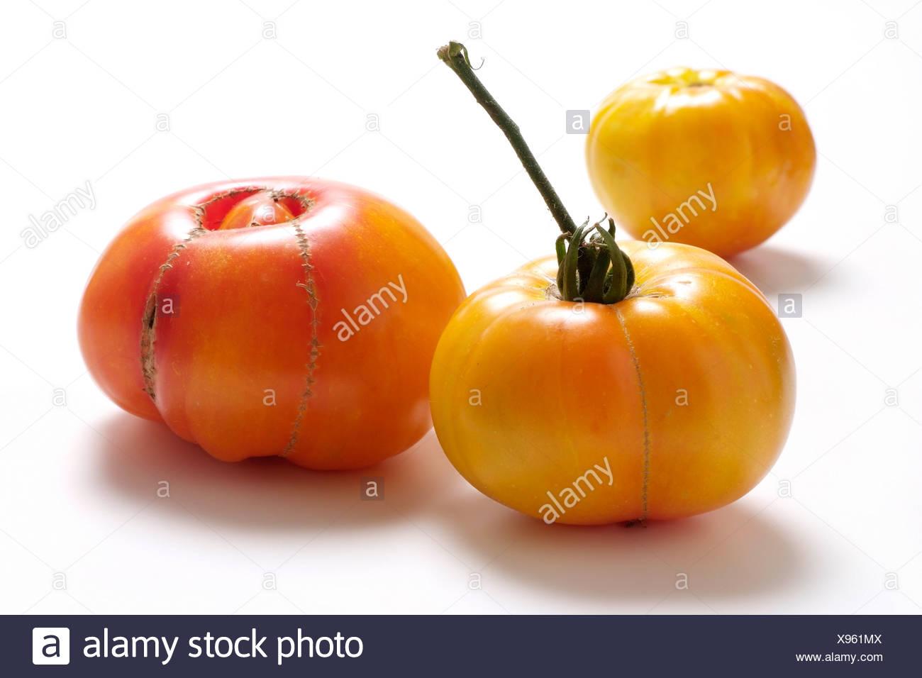 Tomato varieties:  Rainbow - Stock Image