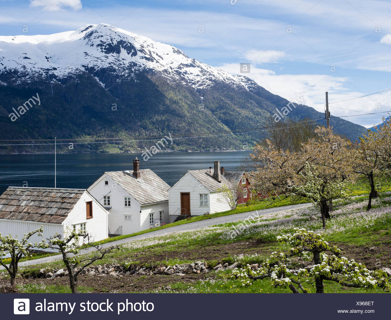 View of snow-covered mountains, fjord and apple trees in bloom, spring, white houses, Hardangerfjord near Lofthus, Hardanger,  Norway, Scandinavia, Europe - Stock Image