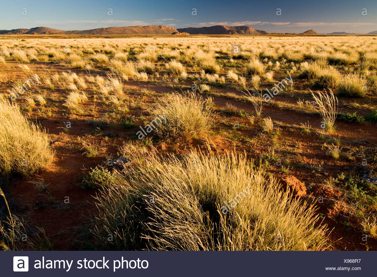 Landscape with grass, Richtersveld National Park, Northern Cape, South Africa, Africa - Stock Image