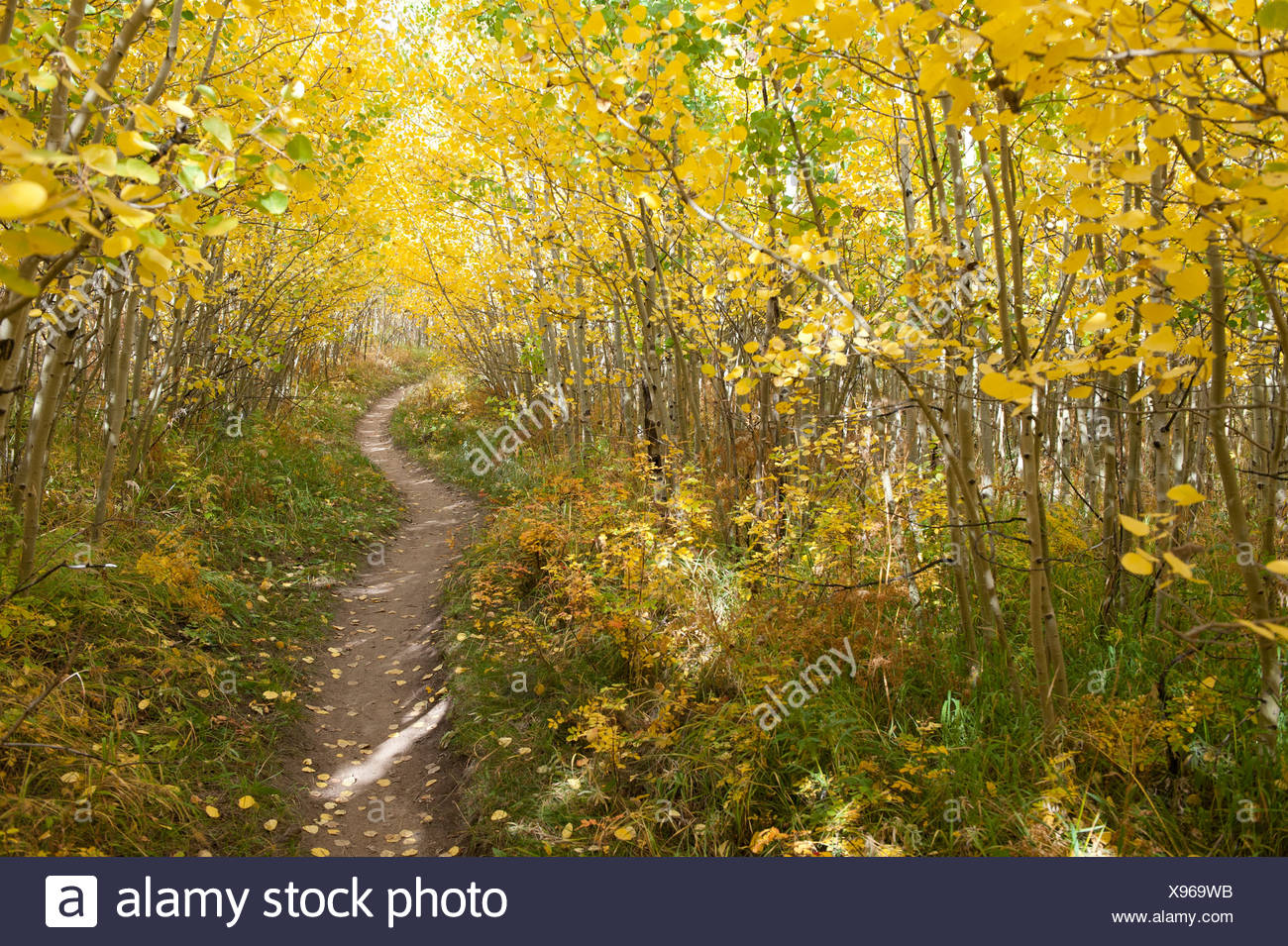 Empty trail through forest in Nederland, Colorado. - Stock Image