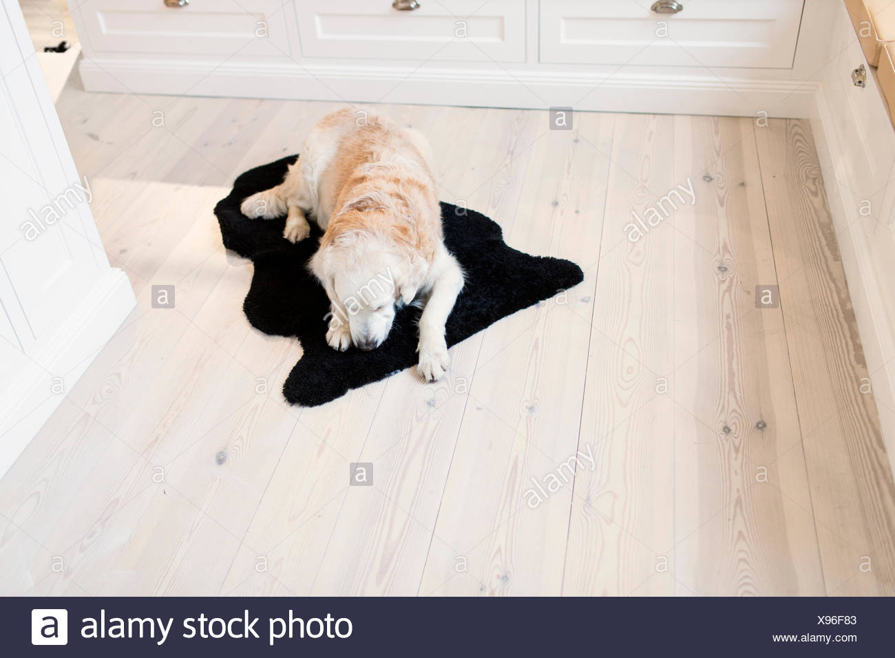 High angle view of dog relaxing on rug in kitchen - Stock Image