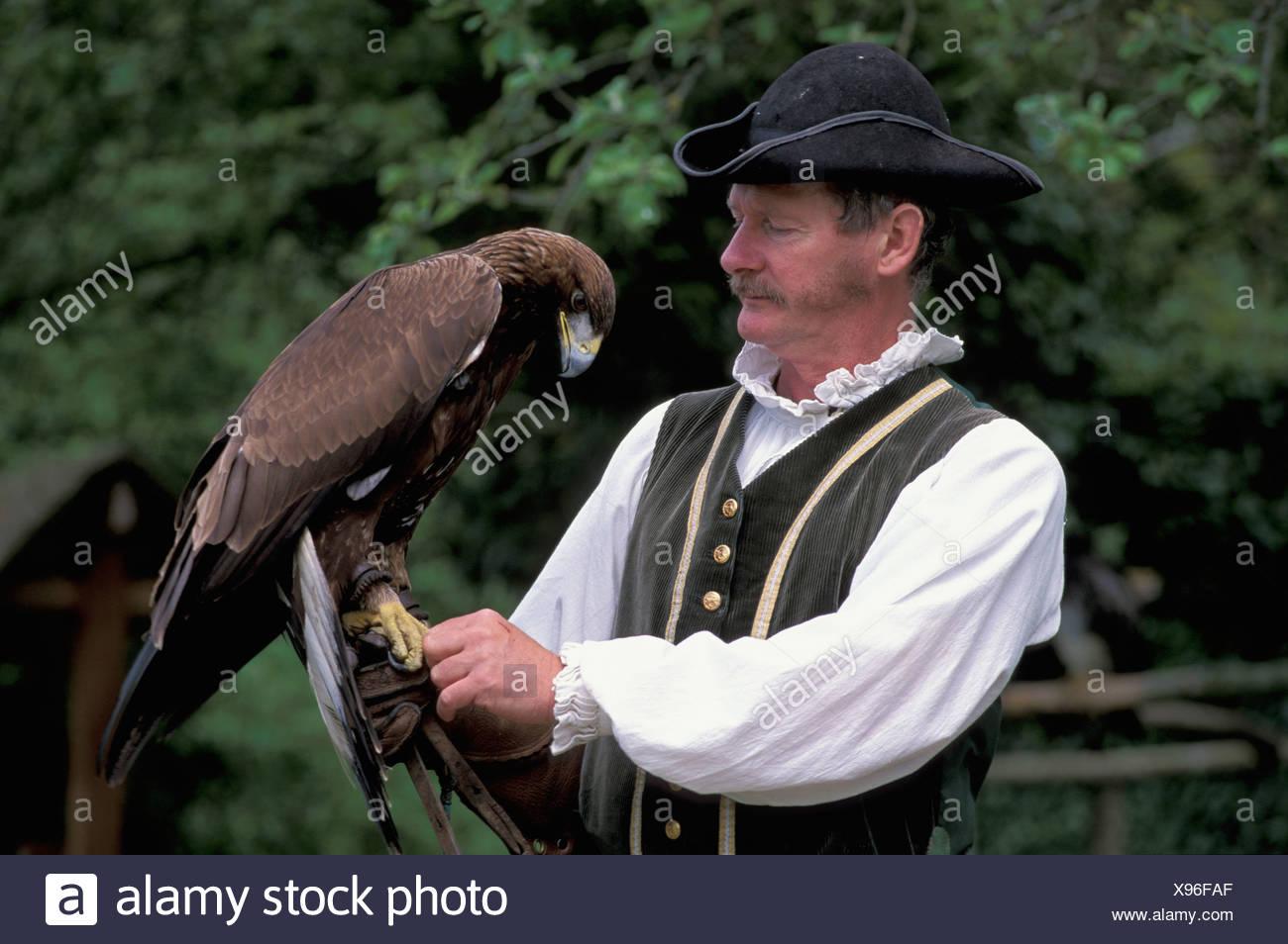 Birds of Prey, Show, Chateau la Bourbansais, Brittany, Bretagne, France, Europe, man - Stock Image