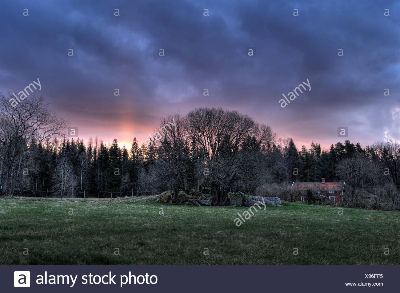 Bad weather above tree - Stock Image