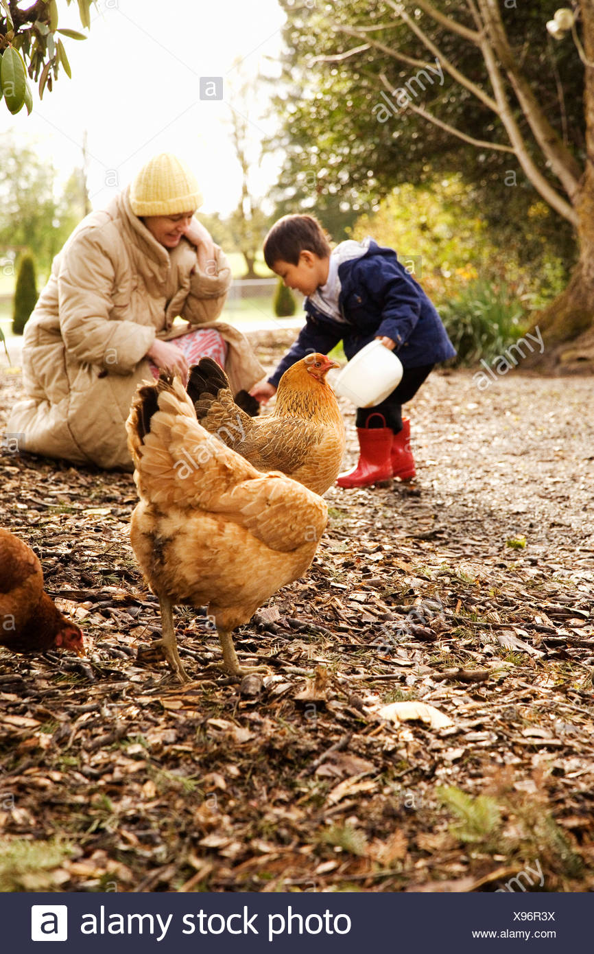 Mother and son feeding chickens - Stock Image