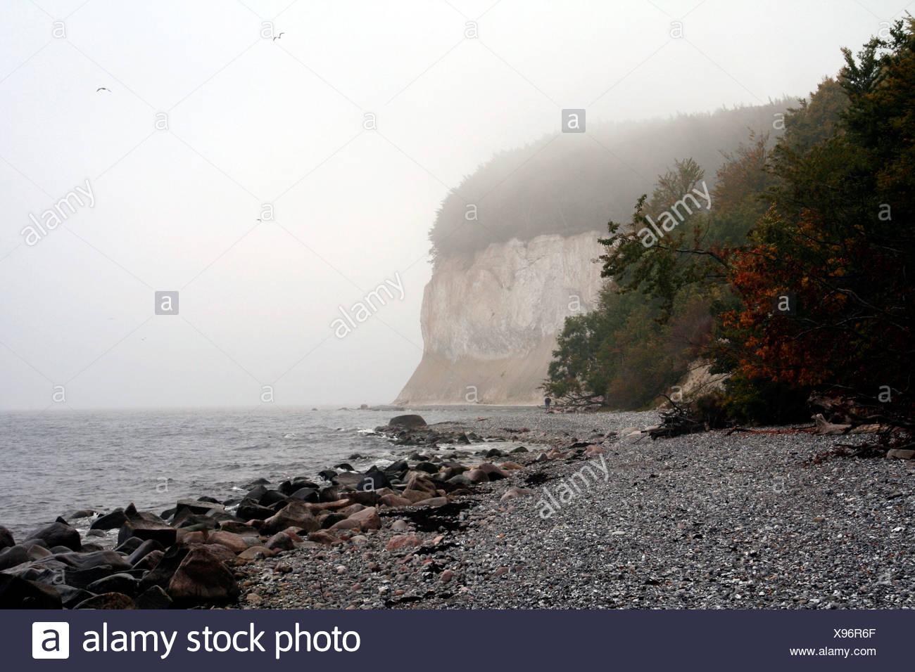Ruegen Island, Kreidekueste, Chalk Coast, Mecklenburg-Western Pomerania, Germany, Europe Stock Photo