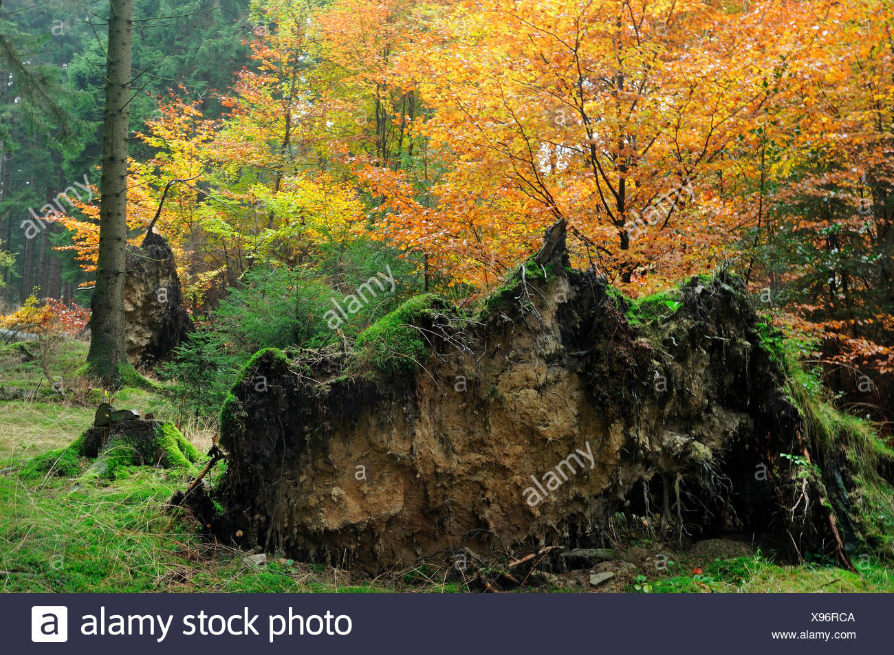 Arnsberg Forest Nature Park