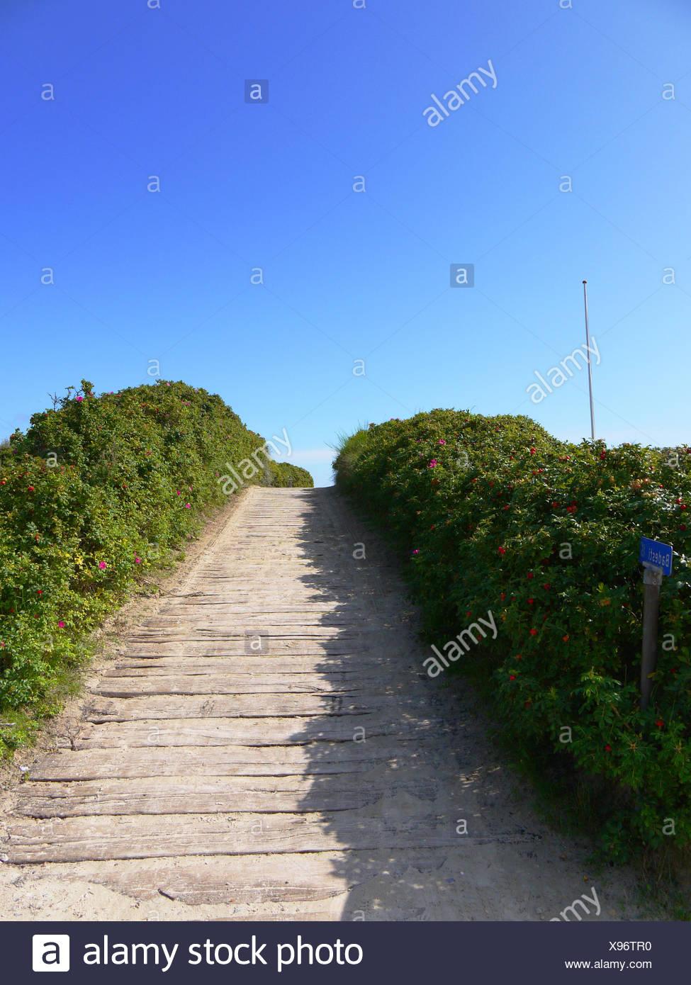 Rosehip lined beach path, Denmark - Stock Image