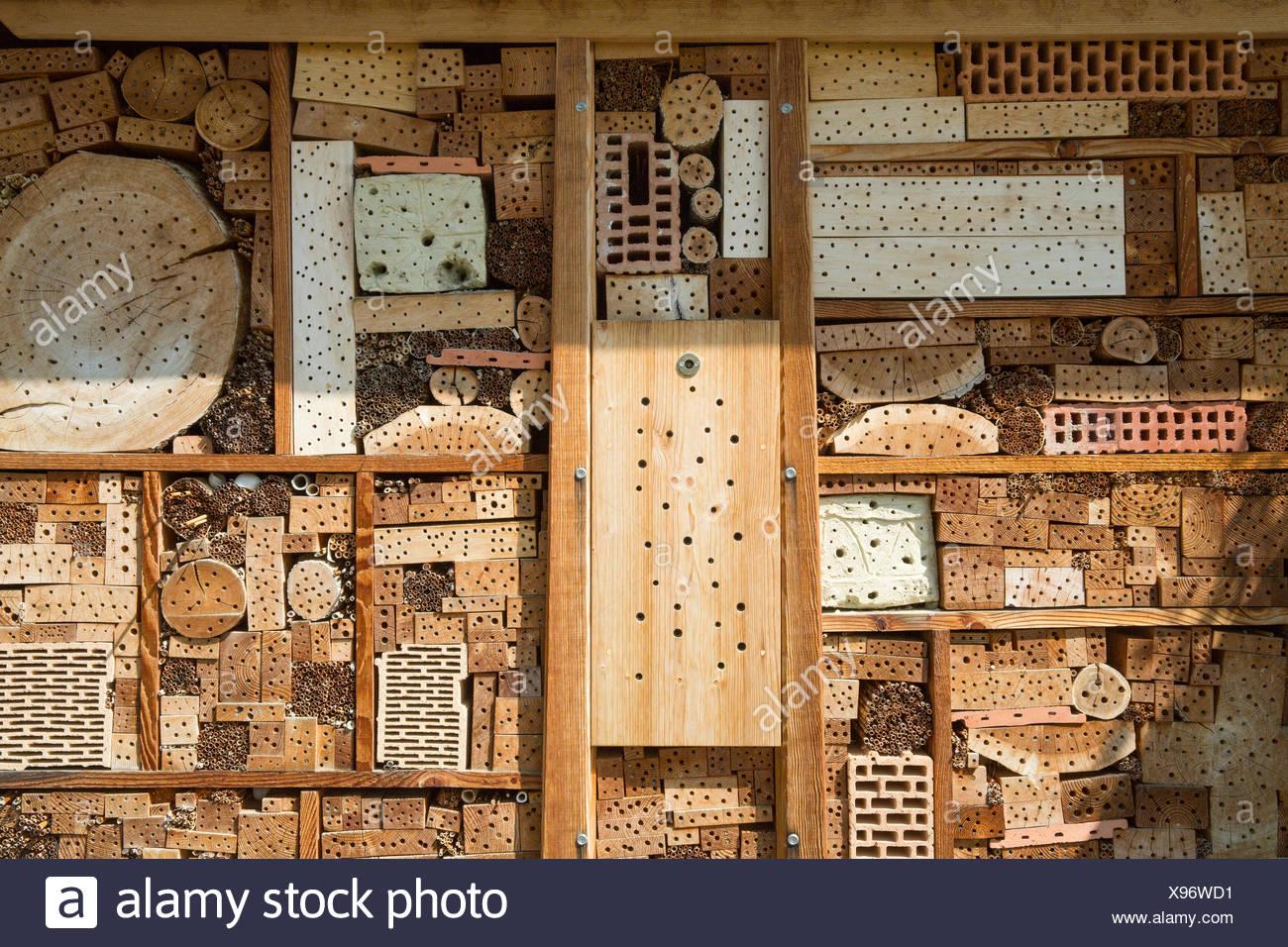Rhine Valley, wild bees, beehive, SG, canton St. Gallen, animals, animal, bees, Switzerland, Europe, - Stock Image