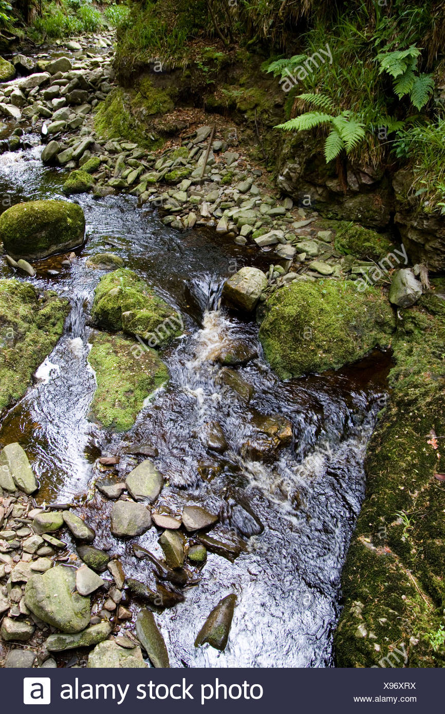 Scotland, Glen of Rothes, moss on rocks in stream - Stock Image