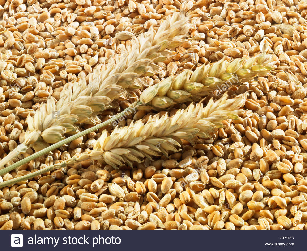 Wheat grains and ears - Stock Image