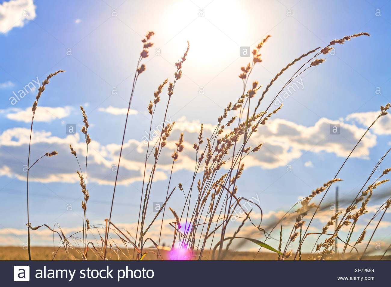 The stems of grass - Stock Image