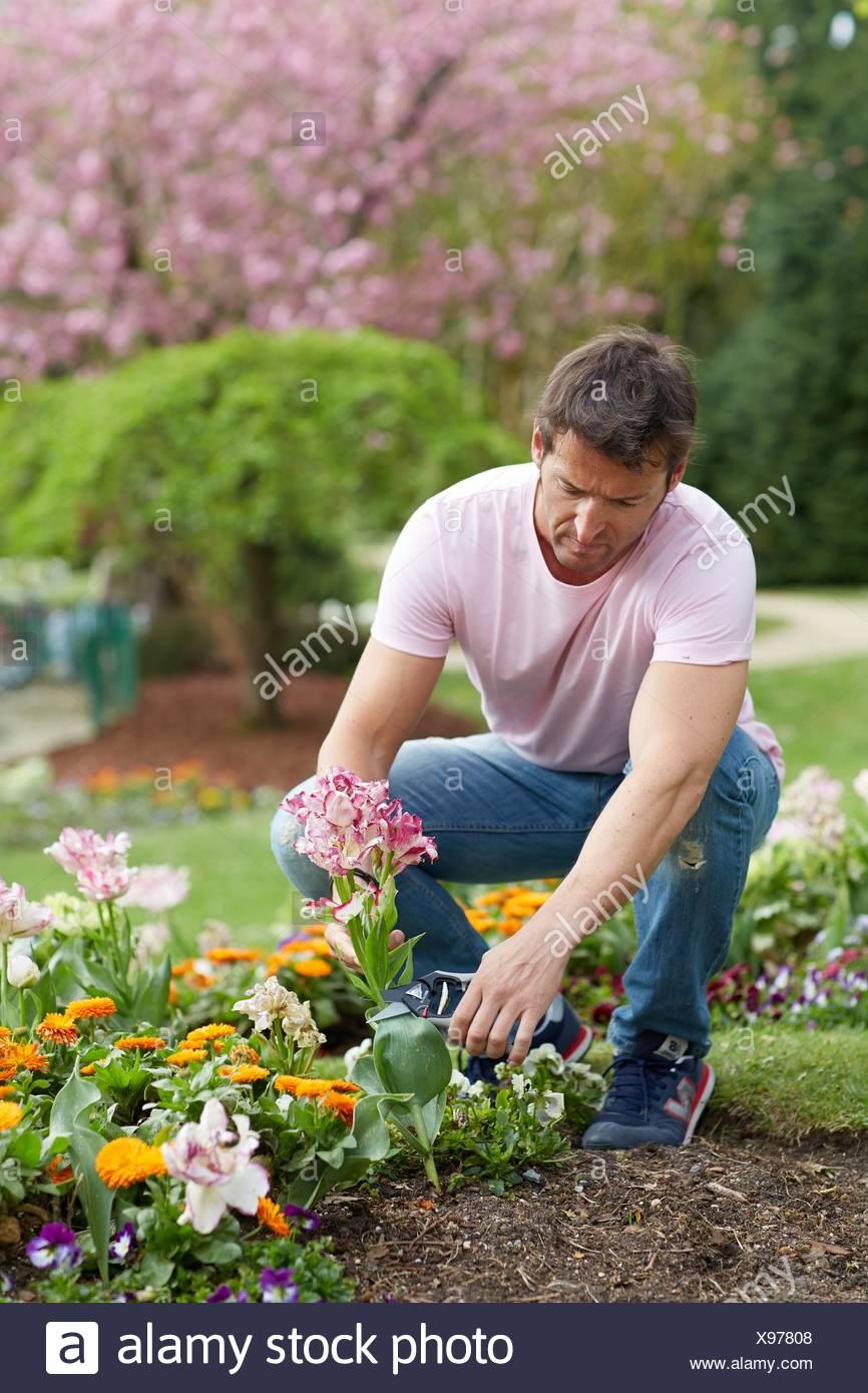 Gardener cutting flowers Pruning secateurs Hand tool Garden,. - Stock Image