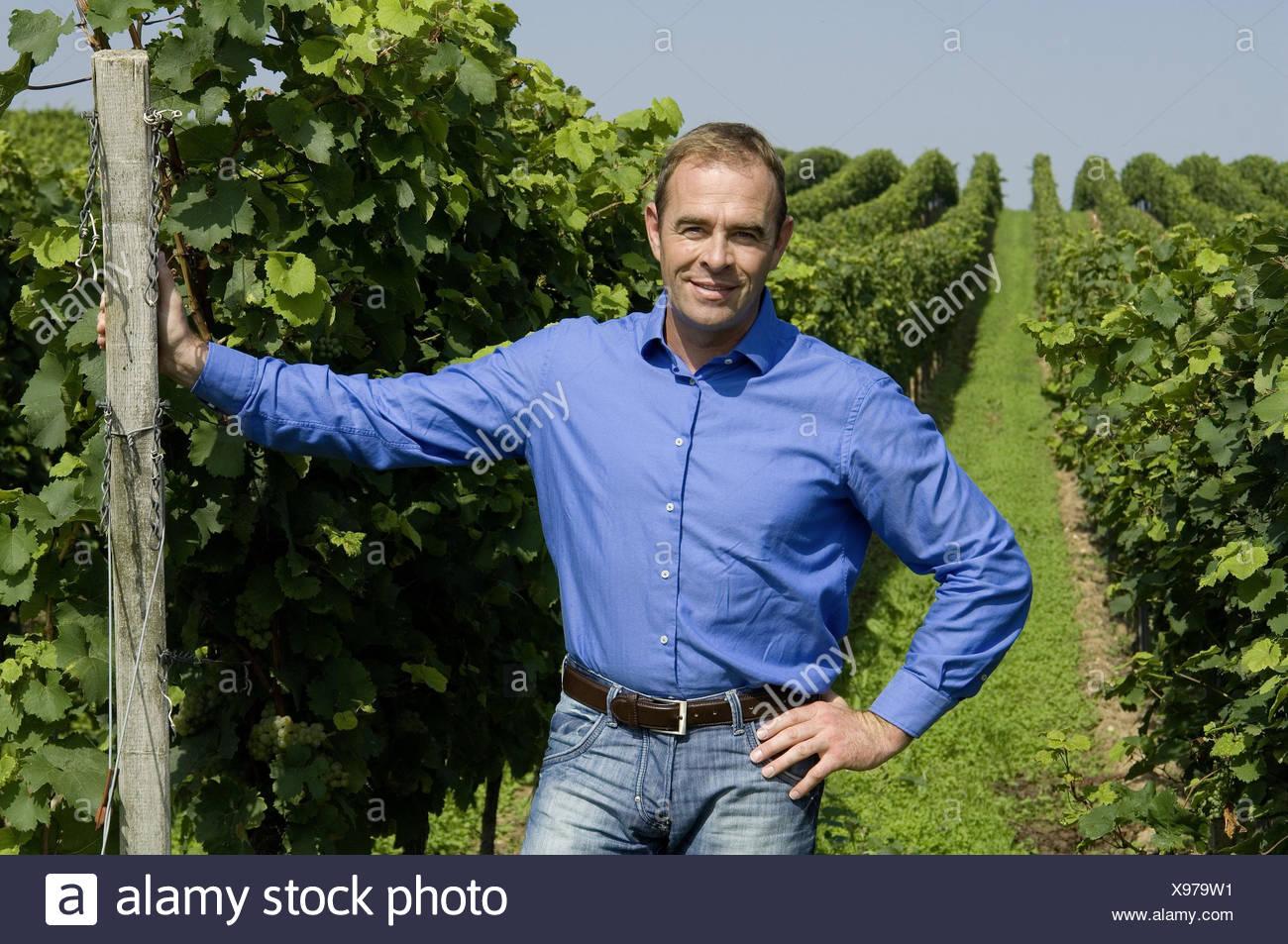 Vineyard, winegrower, satisfaction, person, man, viticulturist, vines, vines, grapes, wine, wine-growing, Önologie, vineyard, the Palatinate, vines, work, occupation, stand, pride, work, occupation, - Stock Image