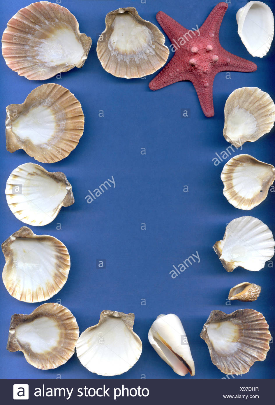 Sea bowls of a mollusk and starfish - Stock Image