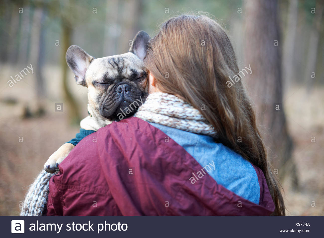 Portrait of cute dog being carried through forest by young woman - Stock Image