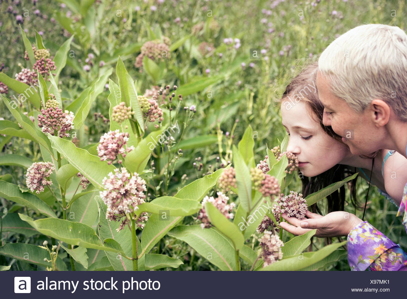A mature woman and a young girl in a wildflower meadow looking closely at the flowers. Stock Photo