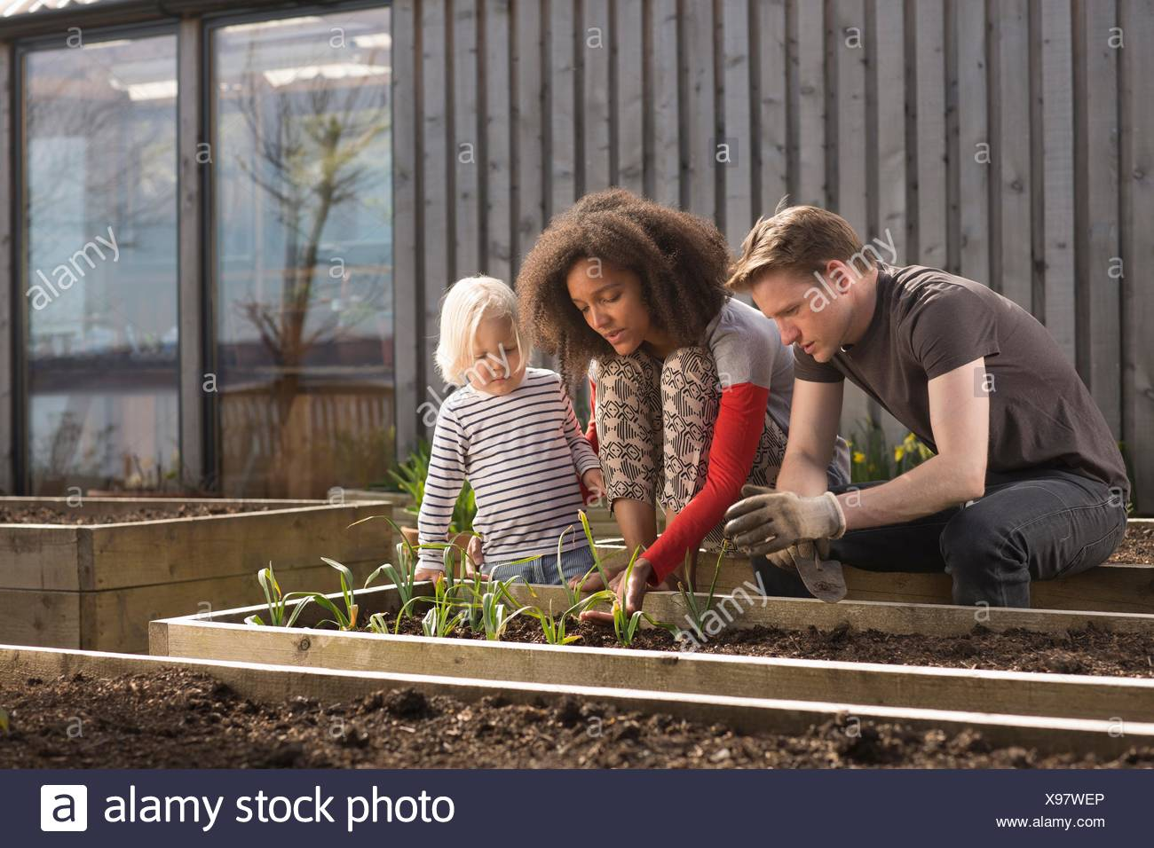 Boy and parents tending plants in raised bed - Stock Image