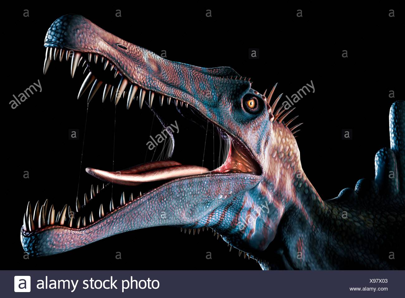 Spinosaurus (meaning 'spine lizard') was arguably the largest known meat-eating dinosaur. It was longer even than Tyrannosaurus - Stock Image