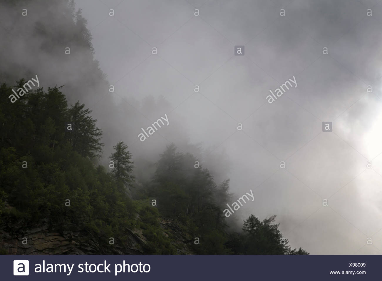 Mountain forest in the midst of clouds - Stock Image
