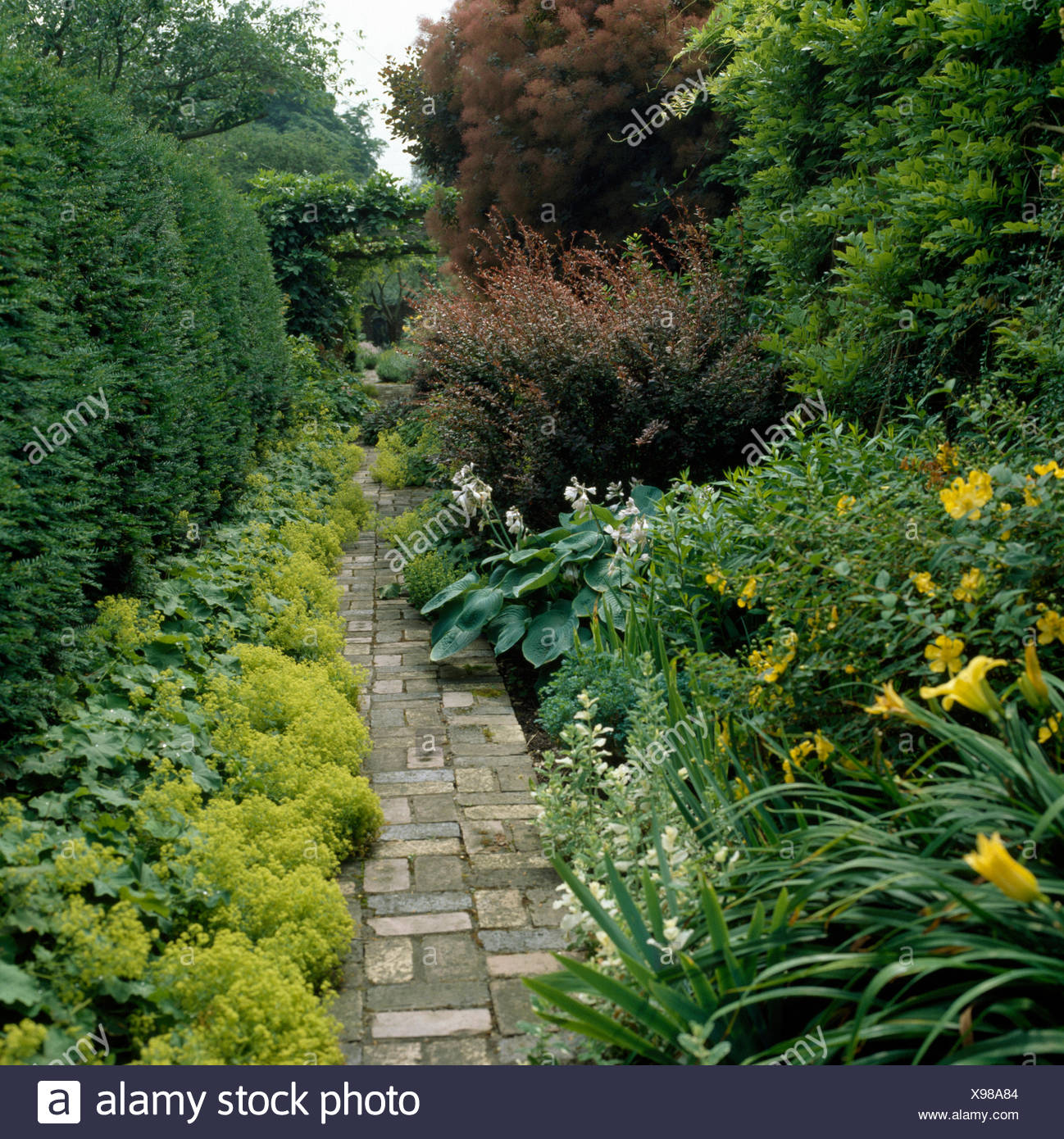 Paved path through borders with yellow Hemerocallis and lime green Alchemilla Mollis in a large country garden - Stock Image