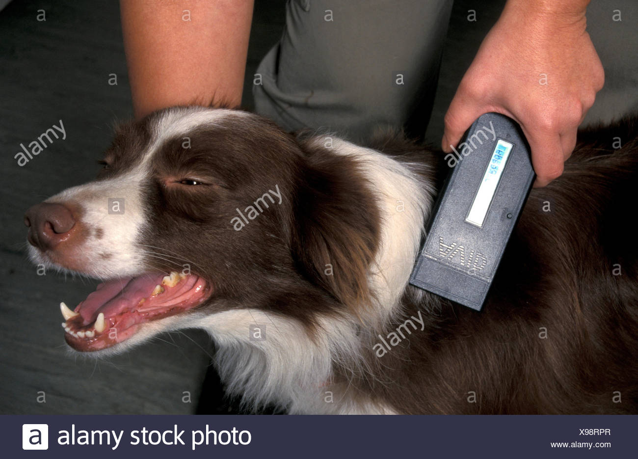 Microchip Dog Stock Photos & Microchip Dog Stock Images - Alamy