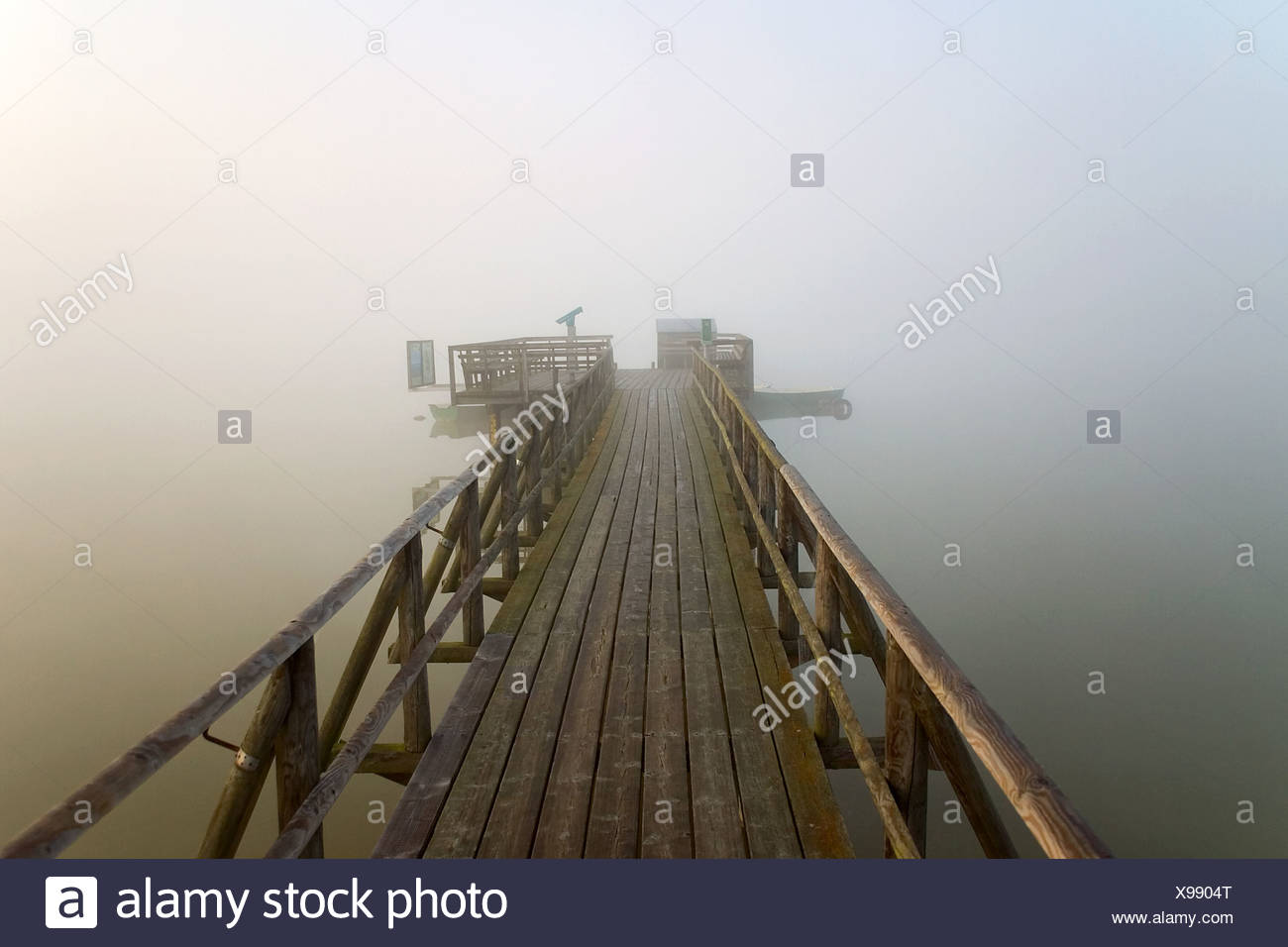 Early morning fog at the Federsee, Federseesteg, Upper Swabia, Baden-Wuerttemberg, Germany Stock Photo