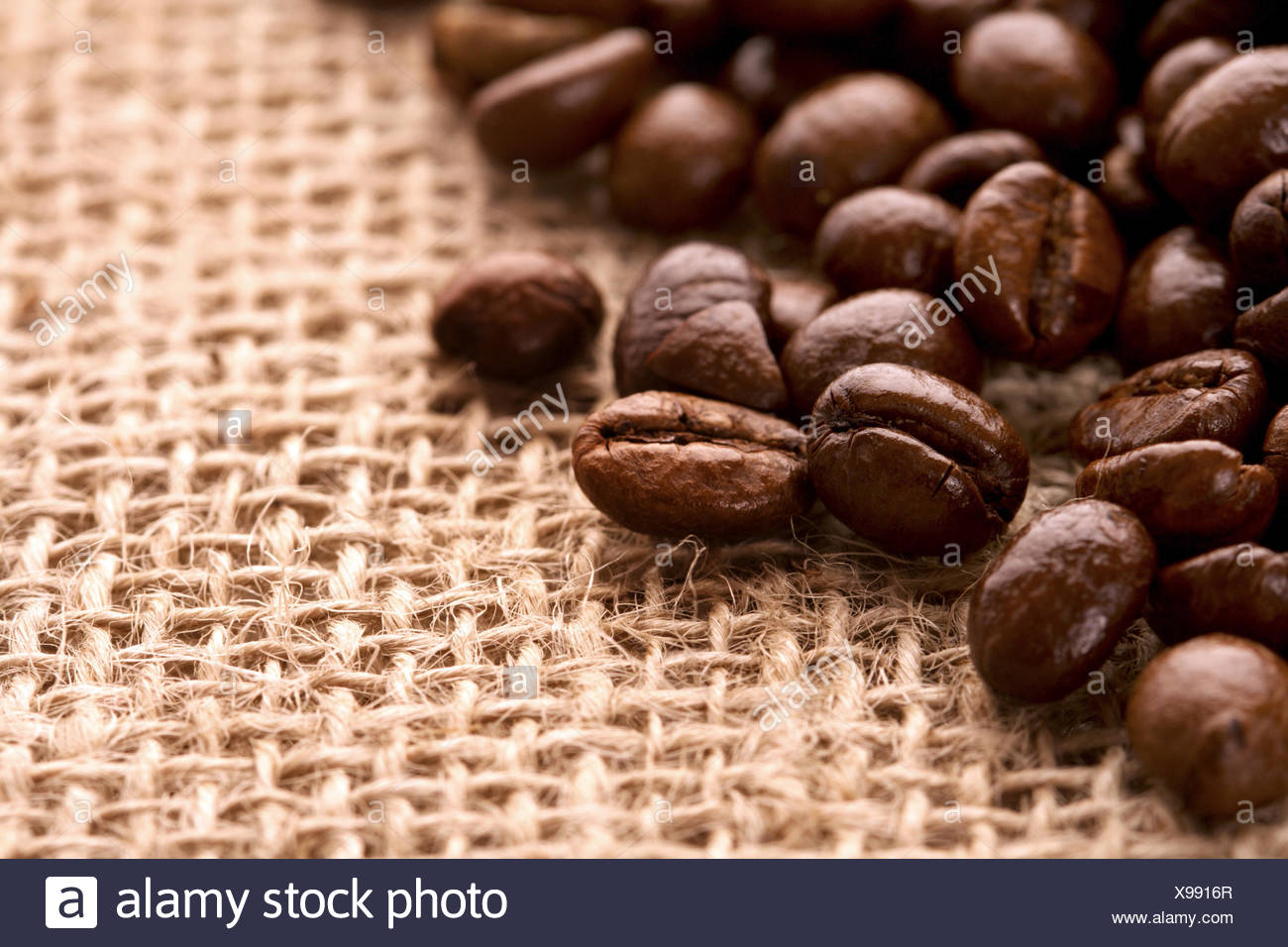 coffee bean,jute - Stock Image