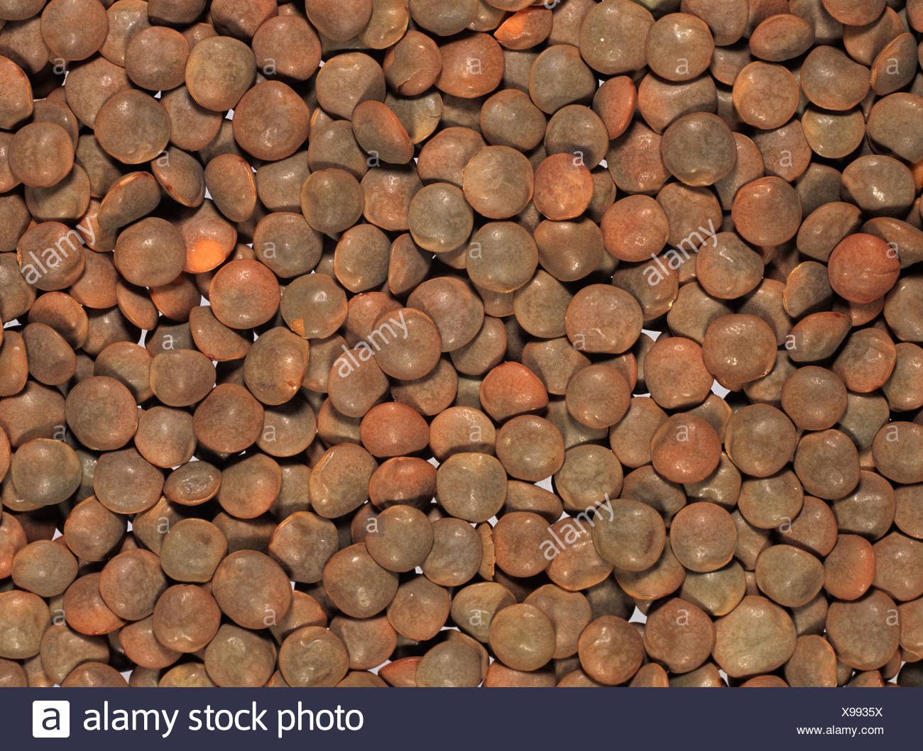 Brown lentils (Lens culinaris) prepared for cooking, produce of Turkey - Stock Image