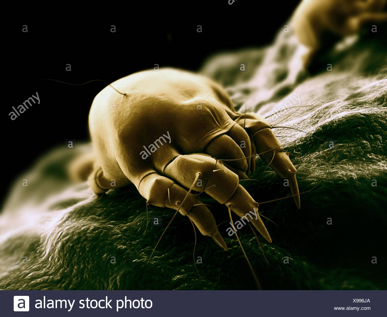 insect dust hygiene - Stock Image
