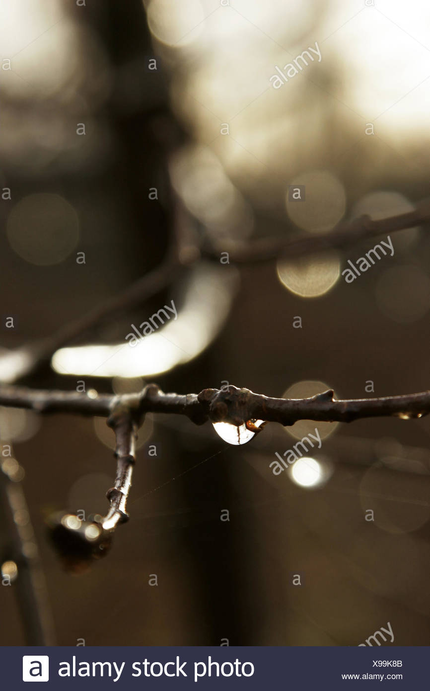 twig, dewdrops, detail, blur, - Stock Image