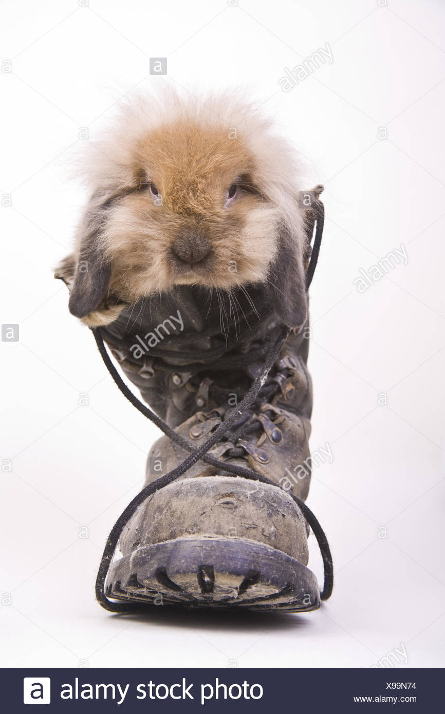 hare in a boot - Stock Image