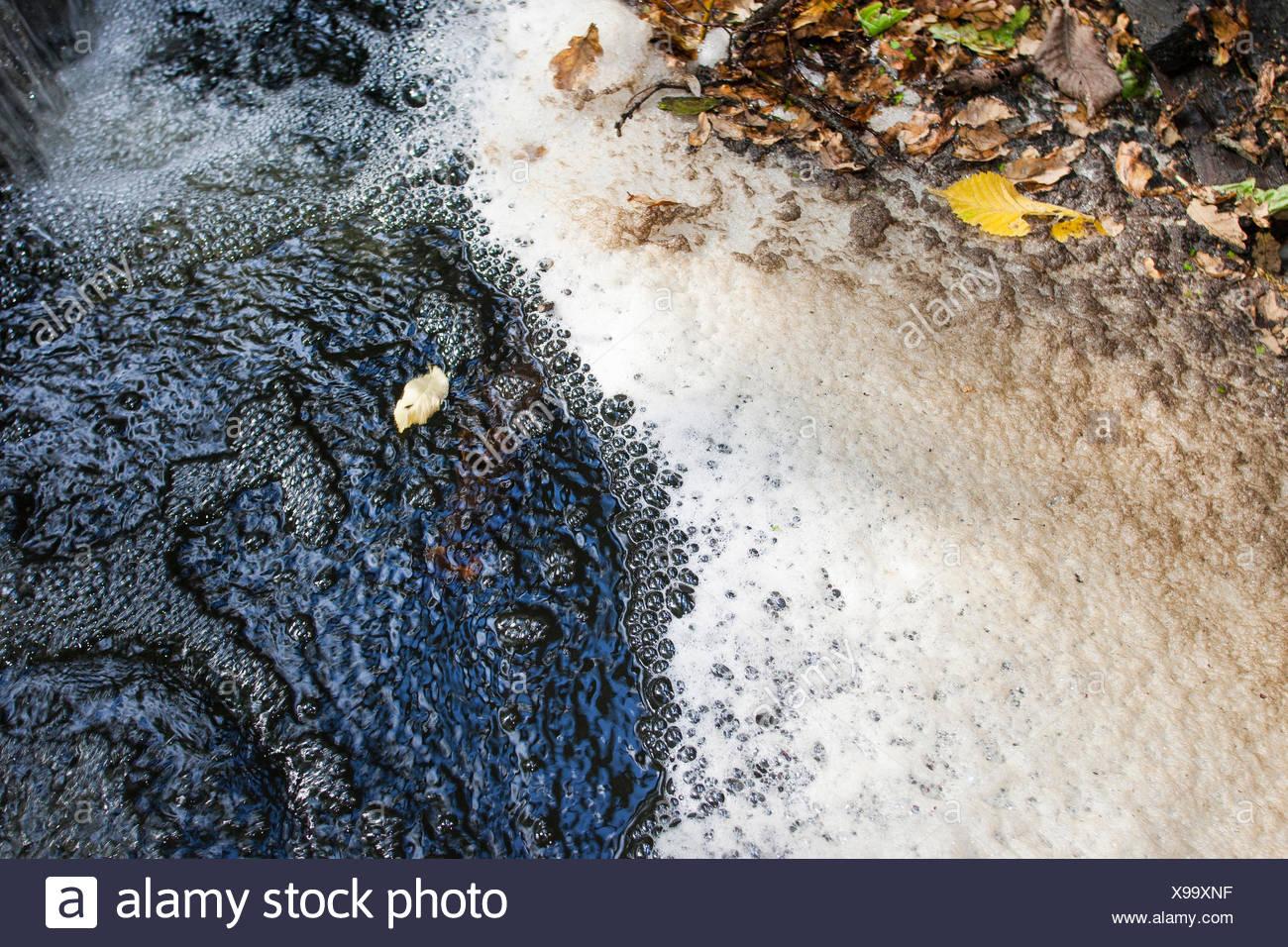 foam in a creek, Germany - Stock Image