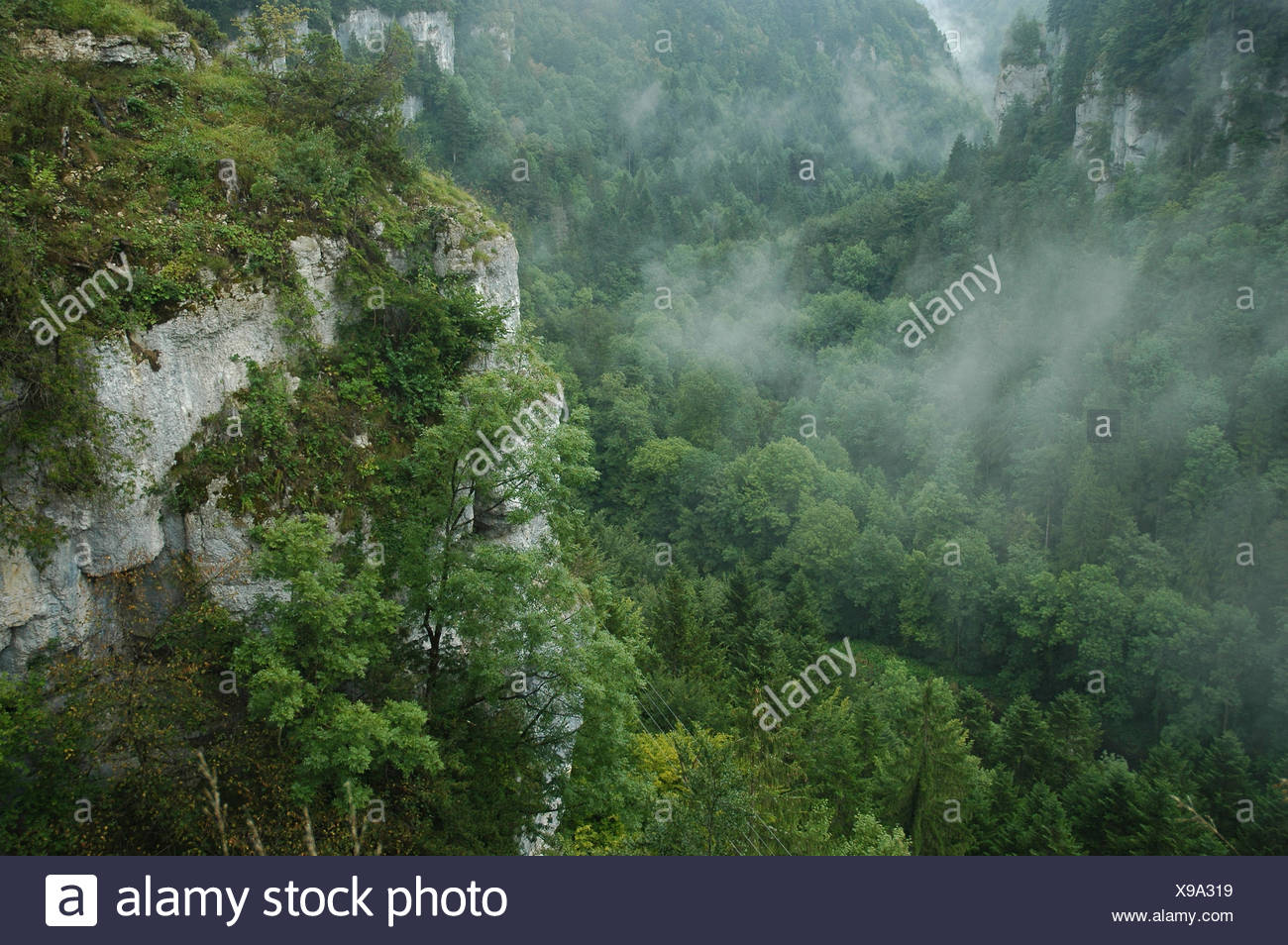 Switzerland, Europe, France, Doubs, border, country border, Clos du Doubs, Echelles de la Mort, rock, cliff, gulch, wood, forest, - Stock Image