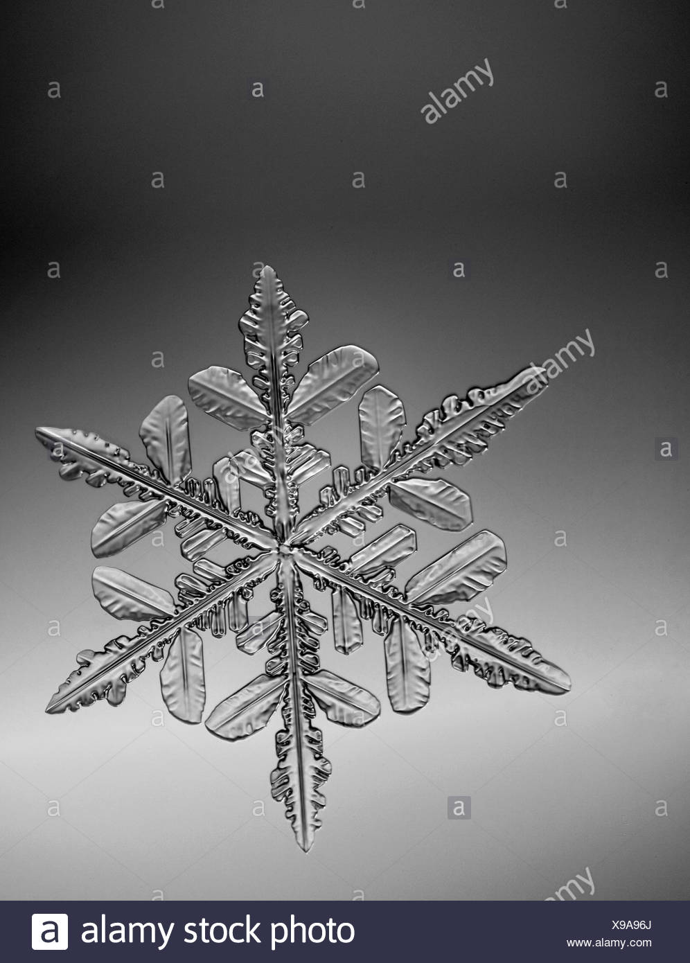 Photo-microscope view of a  snowflake with a star shape - Stock Image