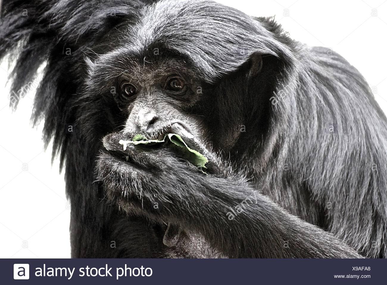 Monkey Feeding At Zoo - Stock Image