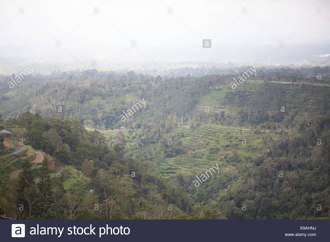 Terraced Field - Stock Image