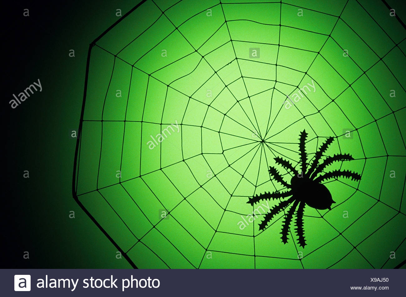 Spider on a web - Stock Image