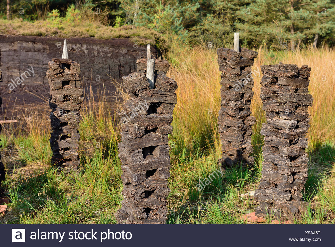 Stacks of peat sods left or drying in the traditional manner, Grundbeckenmoor Rosenheim, near Raubling, Upper Bavaria, Bavaria - Stock Image