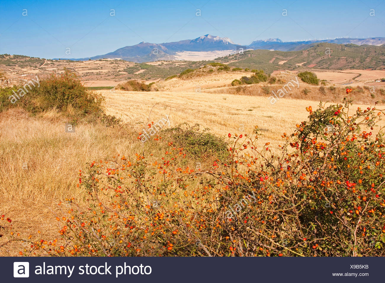 landscape at Camino de Santiago near Estel, Spain, Basque country, Navarra - Stock Image